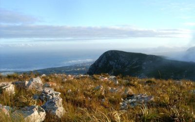 Explore Gansbaai like never before with the Funky Fynbos Festival